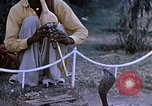 Image of Snake charmer India, 1956, second 7 stock footage video 65675043054