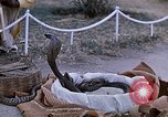 Image of Snake charmer India, 1956, second 12 stock footage video 65675043054
