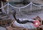 Image of Snake charmer India, 1956, second 14 stock footage video 65675043054
