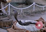 Image of Snake charmer India, 1956, second 15 stock footage video 65675043054