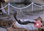 Image of Snake charmer India, 1956, second 16 stock footage video 65675043054