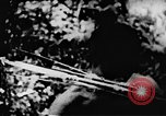 Image of Viet Cong soldiers Vietnam, 1967, second 59 stock footage video 65675043130