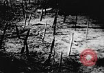 Image of Viet Cong soldiers Vietnam, 1967, second 50 stock footage video 65675043133