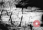 Image of Viet Cong soldiers Vietnam, 1967, second 52 stock footage video 65675043133