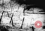 Image of Viet Cong soldiers Vietnam, 1967, second 53 stock footage video 65675043133