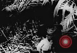 Image of Viet Cong soldiers Vietnam, 1967, second 11 stock footage video 65675043144