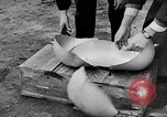 Image of United States Army Air Force target practice Italy, 1945, second 34 stock footage video 65675043288