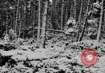 Image of Western Front snow scenes January 1945 in World War II Europe, 1945, second 13 stock footage video 65675043290