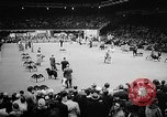 Image of Westminster Dog Show New York City USA, 1960, second 11 stock footage video 65675043366