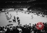 Image of Westminster Dog Show New York City USA, 1960, second 12 stock footage video 65675043366
