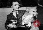 Image of Westminster Dog Show New York City USA, 1960, second 18 stock footage video 65675043366