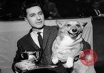 Image of Westminster Dog Show New York City USA, 1960, second 19 stock footage video 65675043366