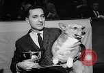 Image of Westminster Dog Show New York City USA, 1960, second 20 stock footage video 65675043366