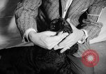 Image of Westminster Dog Show New York City USA, 1960, second 30 stock footage video 65675043366