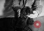 Image of Westminster Dog Show New York City USA, 1960, second 31 stock footage video 65675043366