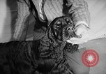 Image of Westminster Dog Show New York City USA, 1960, second 32 stock footage video 65675043366