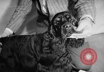 Image of Westminster Dog Show New York City USA, 1960, second 33 stock footage video 65675043366