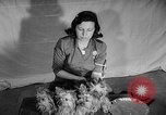 Image of Westminster Dog Show New York City USA, 1960, second 34 stock footage video 65675043366