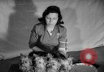 Image of Westminster Dog Show New York City USA, 1960, second 35 stock footage video 65675043366