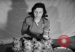 Image of Westminster Dog Show New York City USA, 1960, second 36 stock footage video 65675043366