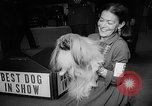 Image of Westminster Dog Show New York City USA, 1960, second 51 stock footage video 65675043366