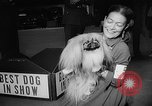 Image of Westminster Dog Show New York City USA, 1960, second 53 stock footage video 65675043366