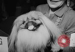 Image of Westminster Dog Show New York City USA, 1960, second 54 stock footage video 65675043366