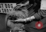 Image of Westminster Dog Show New York City USA, 1960, second 58 stock footage video 65675043366