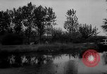 Image of Cattle released Holland Netherlands, 1959, second 5 stock footage video 65675043374