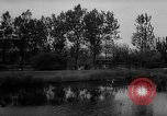 Image of Cattle released Holland Netherlands, 1959, second 6 stock footage video 65675043374