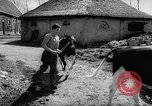 Image of Cattle released Holland Netherlands, 1959, second 8 stock footage video 65675043374