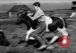 Image of Cattle released Holland Netherlands, 1959, second 13 stock footage video 65675043374