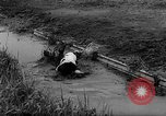Image of Cattle released Holland Netherlands, 1959, second 29 stock footage video 65675043374