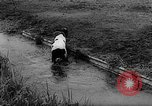 Image of Cattle released Holland Netherlands, 1959, second 30 stock footage video 65675043374