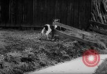 Image of Cattle released Holland Netherlands, 1959, second 35 stock footage video 65675043374