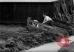 Image of Cattle released Holland Netherlands, 1959, second 38 stock footage video 65675043374