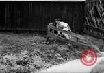 Image of Cattle released Holland Netherlands, 1959, second 39 stock footage video 65675043374