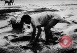 Image of fish farming Dutch Guiana, 1957, second 10 stock footage video 65675043389