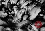 Image of fish farming Dutch Guiana, 1957, second 30 stock footage video 65675043389
