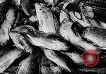 Image of fish farming Dutch Guiana, 1957, second 32 stock footage video 65675043389