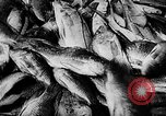 Image of fish farming Dutch Guiana, 1957, second 33 stock footage video 65675043389