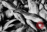 Image of fish farming Dutch Guiana, 1957, second 35 stock footage video 65675043389