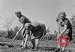 Image of Hitler Youth Poland, 1940, second 3 stock footage video 65675043395