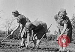 Image of Hitler Youth Poland, 1940, second 5 stock footage video 65675043395