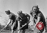 Image of Hitler Youth Poland, 1940, second 10 stock footage video 65675043395