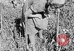 Image of Hitler Youth Poland, 1940, second 12 stock footage video 65675043395
