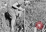 Image of Hitler Youth Poland, 1940, second 16 stock footage video 65675043395