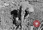 Image of Hitler Youth Poland, 1940, second 19 stock footage video 65675043395