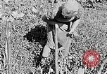 Image of Hitler Youth Poland, 1940, second 20 stock footage video 65675043395