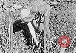 Image of Hitler Youth Poland, 1940, second 21 stock footage video 65675043395